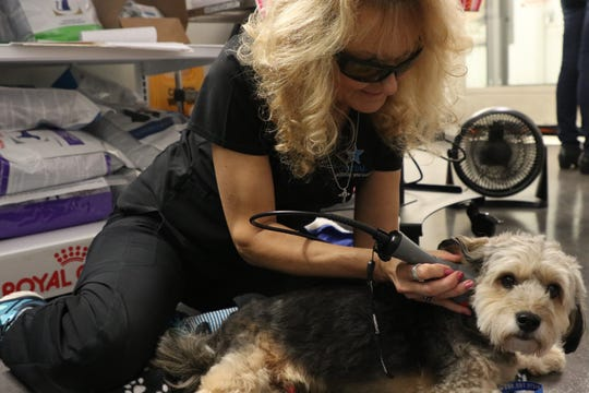 Cathy DeMay, a veterinary technician, performs a cold laser treatment on a patient at Capital Veterinary Specialists Thursday, August 16, 2019.