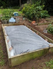 Solarize during the hottest months using clear plastic sheeting.