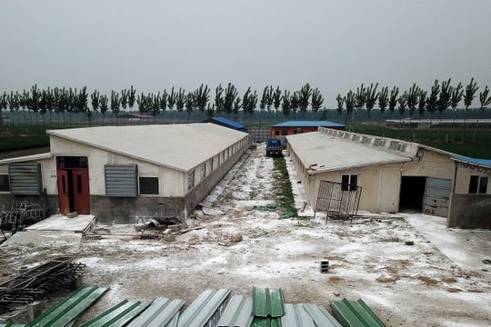 In this May 8, 2019, photo, white disinfectant powder is scattered on the ground around buildings at a pig farm in Jiangjiaqiao village in northern China's Hebei province. As a deadly virus ravages pig herds across Asia, scientists are accelerating efforts to develop a vaccine to help guard the world's pork supply.