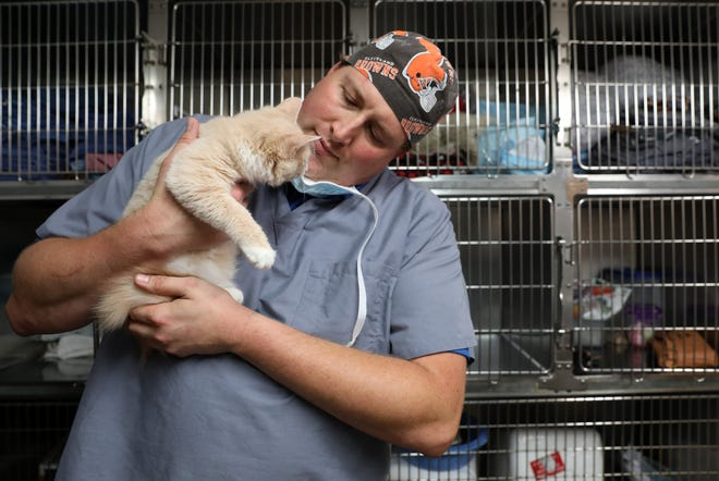 Neal Heilman checks on a cat at his practice, Olde Falls Road Veterinary Clinic.