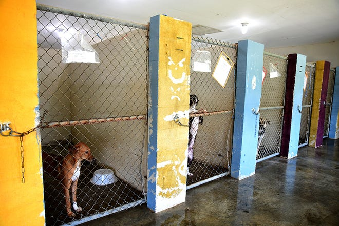 Columbia Animal Control and Rescue houses more than 50 dogs available for adoption Aug. 22, 2019.