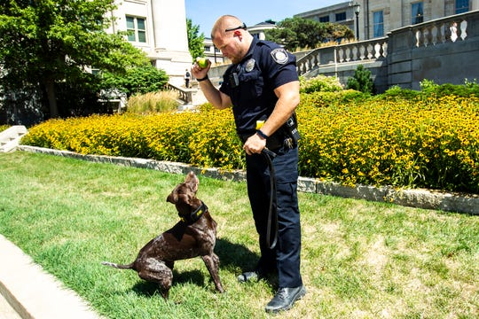 University of Iowa police officer K9 Hogan sits in anticipation of officer Nate Monter throwing with a ball, Thursday, Aug. 22, 2019, on the west side of the Pentacrest, in Iowa City, Iowa. K9 Hogan is a two-year-old German Shorthaired Pointer.