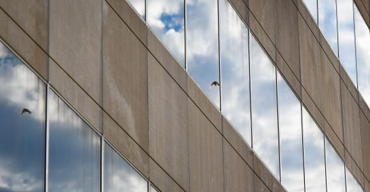 A bird changes flight after a near run-in with a set of windows on the John A. Hannah Building in downtown Lansing.