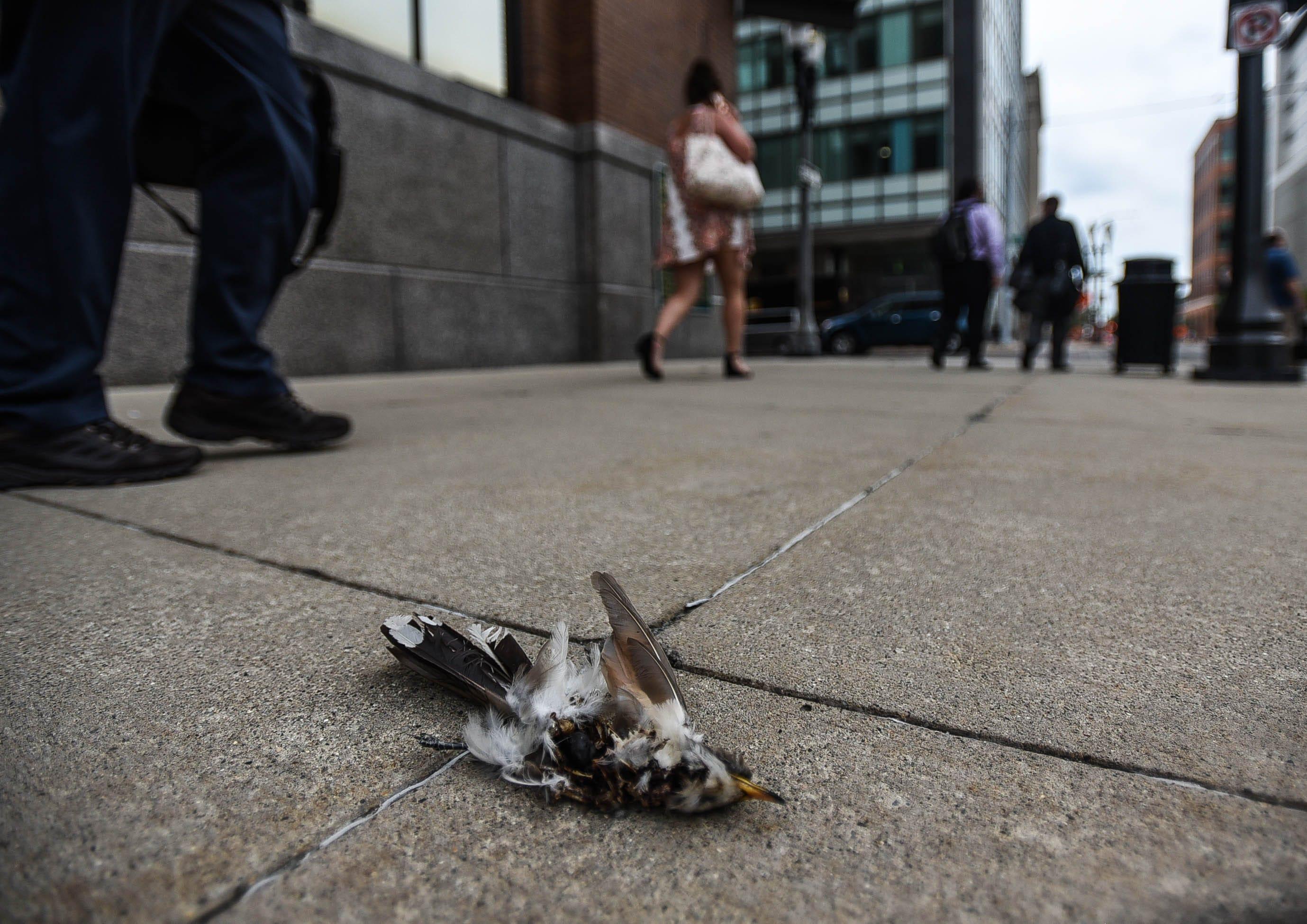 Michigan Audubon Society Counting Bird Collisions In Lansing