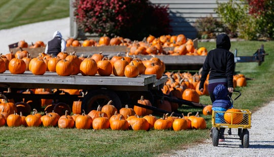 A little one hitches a ride in a pumpkin wagon at Homestead Animal Farm in Hartland in 2015.