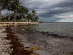 Smelly sargassum seaweed on Naples beaches may be 'new norm,' scientists say