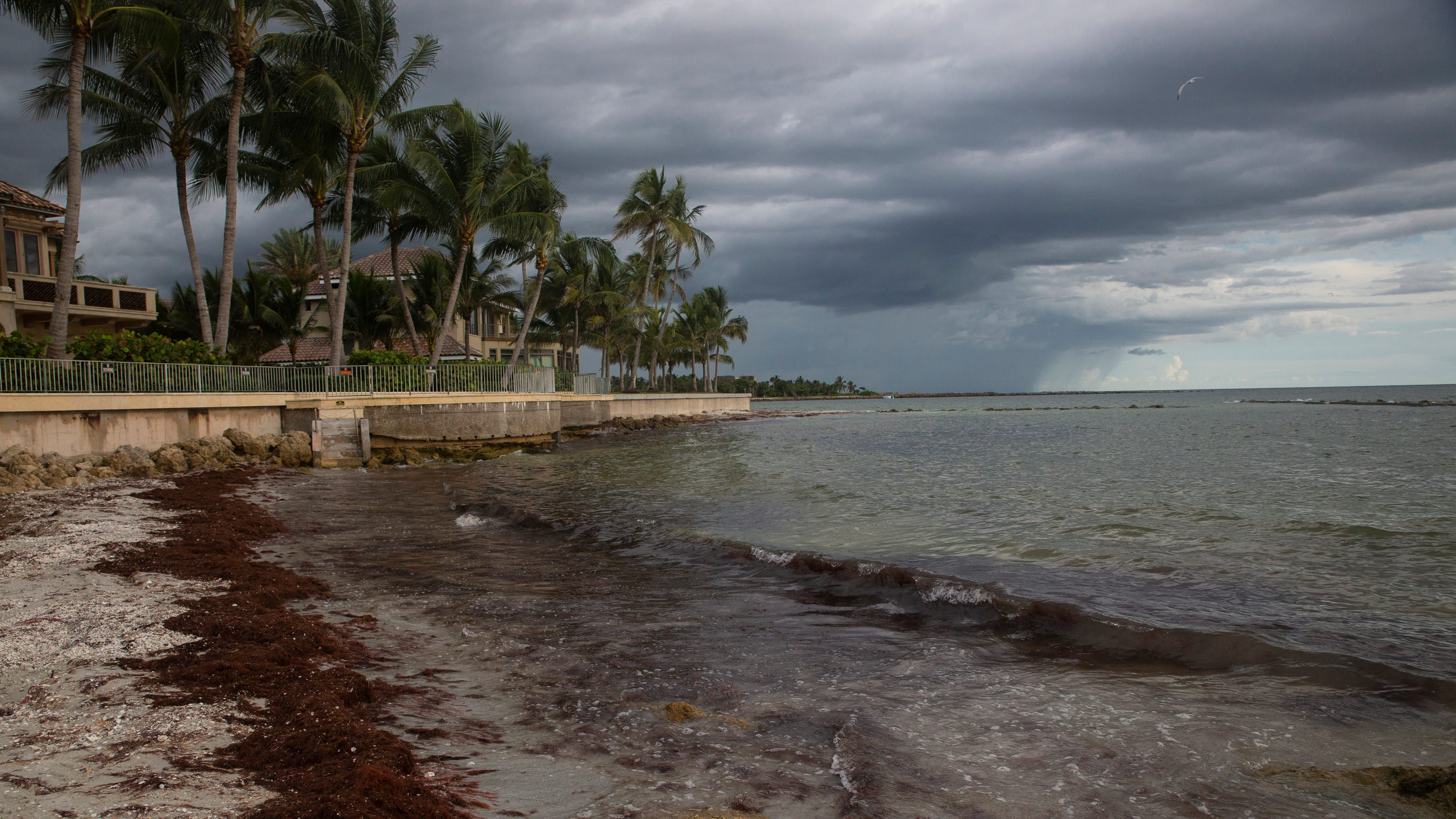 Sargassum seaweed on Naples beaches may be the 'new norm'