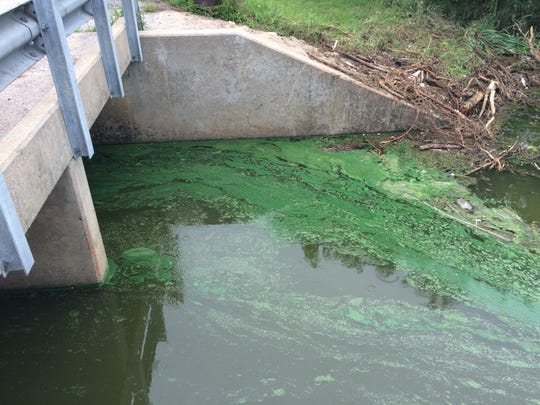A 2015 photo shows blue-green algae (cyanobacteria) at Binder Lake in Cole County.