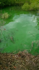 Water stained bright green by cyanobacteria at Smithville Lake in Clay County in 2015.