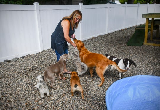 Owner Kelly Thompson says hello to dogs in the outdoor play area Thursday, Aug. 22, 2019, at KNOTTY Paws in Sartell.