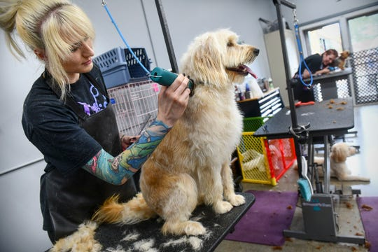 Assistant manager Liz Gapinski grooms a dog Thursday, Aug. 22, 2019, at KNOTTY Paws in Sartell.
