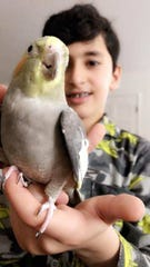 Sammy the cockatiel perches on Mohammed's fingers after the two were reunited Thursday in Santa Barbara.