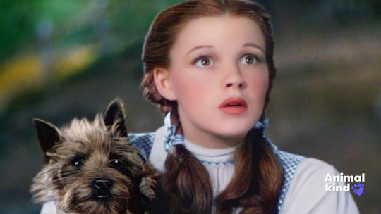 We love you, Toto! The 10 best movie dogs of all time