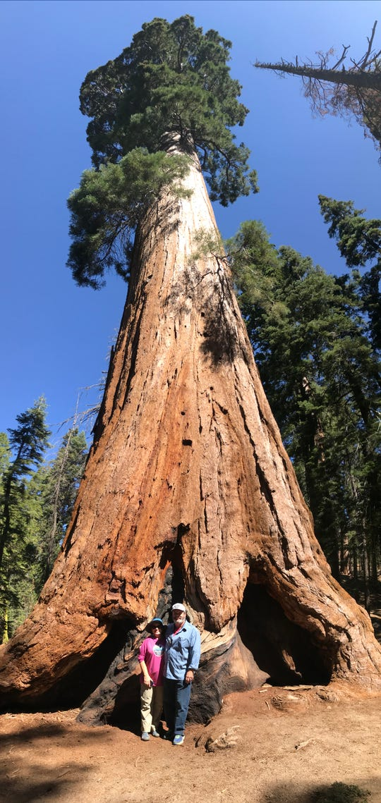 When full-grown, sequoias reach upwards of 250 feet and are often 2,000-3,000 years old. John and Grace Boyle stand in front of one in Sequoia National Park.