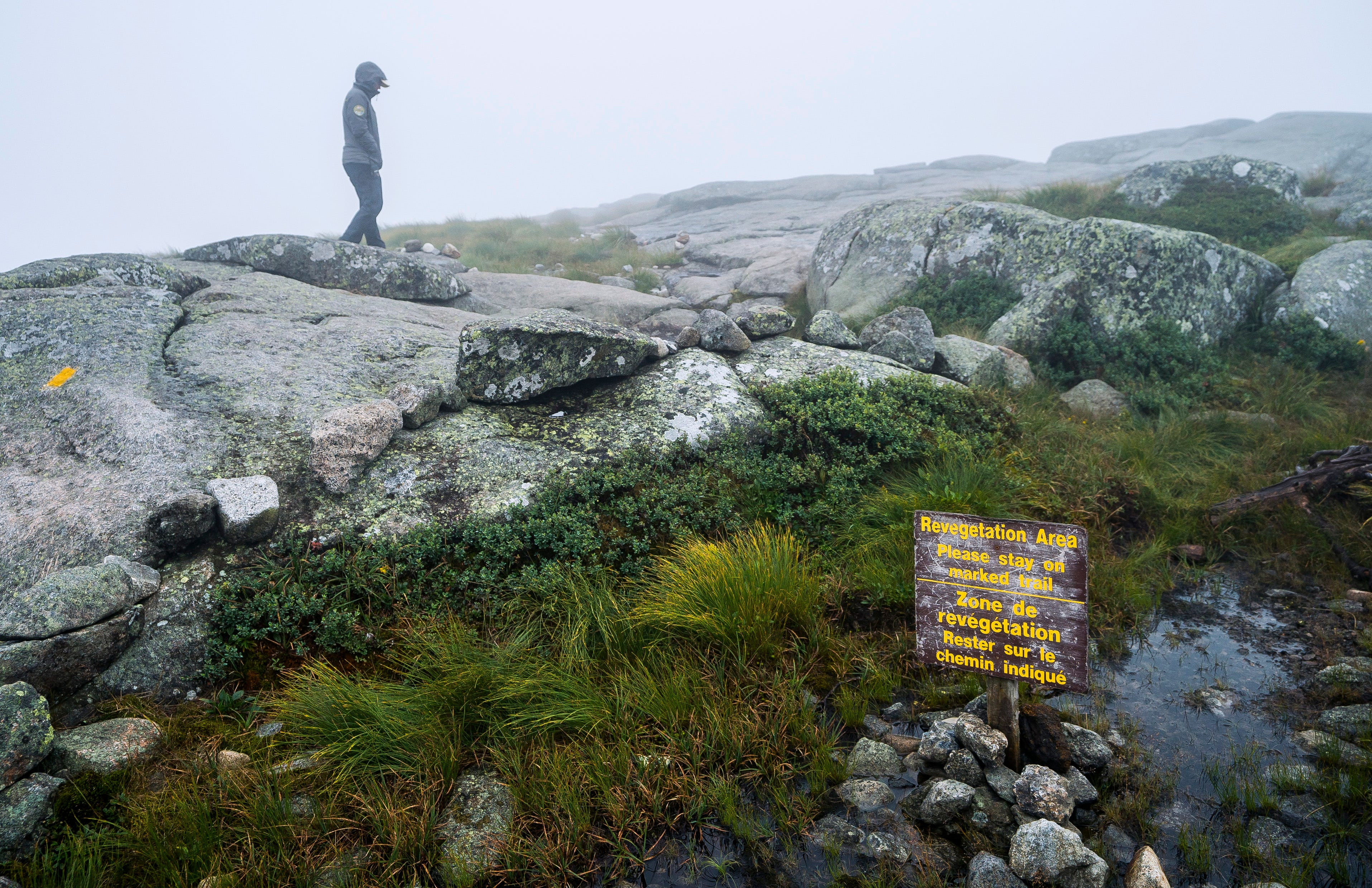 Summit Steward Michaela Dunn with the Adirondack Mountain Club watches over Algonquin Peak on Saturday, Aug. 10, 2019, quick to intercept hikers and educate them about staying on the rock and off the fragile Alpine plants and grasses as well as the gravel mineral pools, crucial for plant grown. Steward efforts at summits across the Adirondacks have saved plants that were disappearing from peaks decades ago.