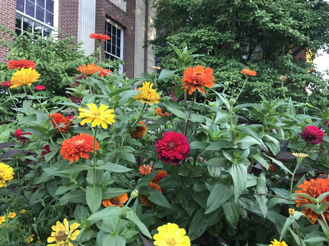 Flowers fill the beds in front of Burlington City Hall on the morning of Friday, Aug. 23, 2019.