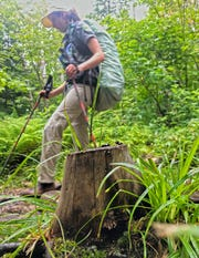 Summit Steward Trail Coordinator Kayla White with the Adirondack Mountain Club walks past a tree stump on the Algonquin Trail in the Adirondack Park's High Peaks region on Saturday, Aug. 10, 2019. The tree was cut down illegally, she said, most likely by a backcountry ski enthusiast trying to make room on the trail. When trees or plants are removed from the trail's edge, it leads to erosion and trail damage.