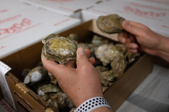 Steve Rash, owner and president of Water Street Seafood in Apalachicola, no longer buys Apalachicola Bay oysters, getting them instead from Texas and Cedar Key. He thinks all oyster harvesting in the bay should be stopped. (Kevin Spear/Orlando Sentinel/TNS)