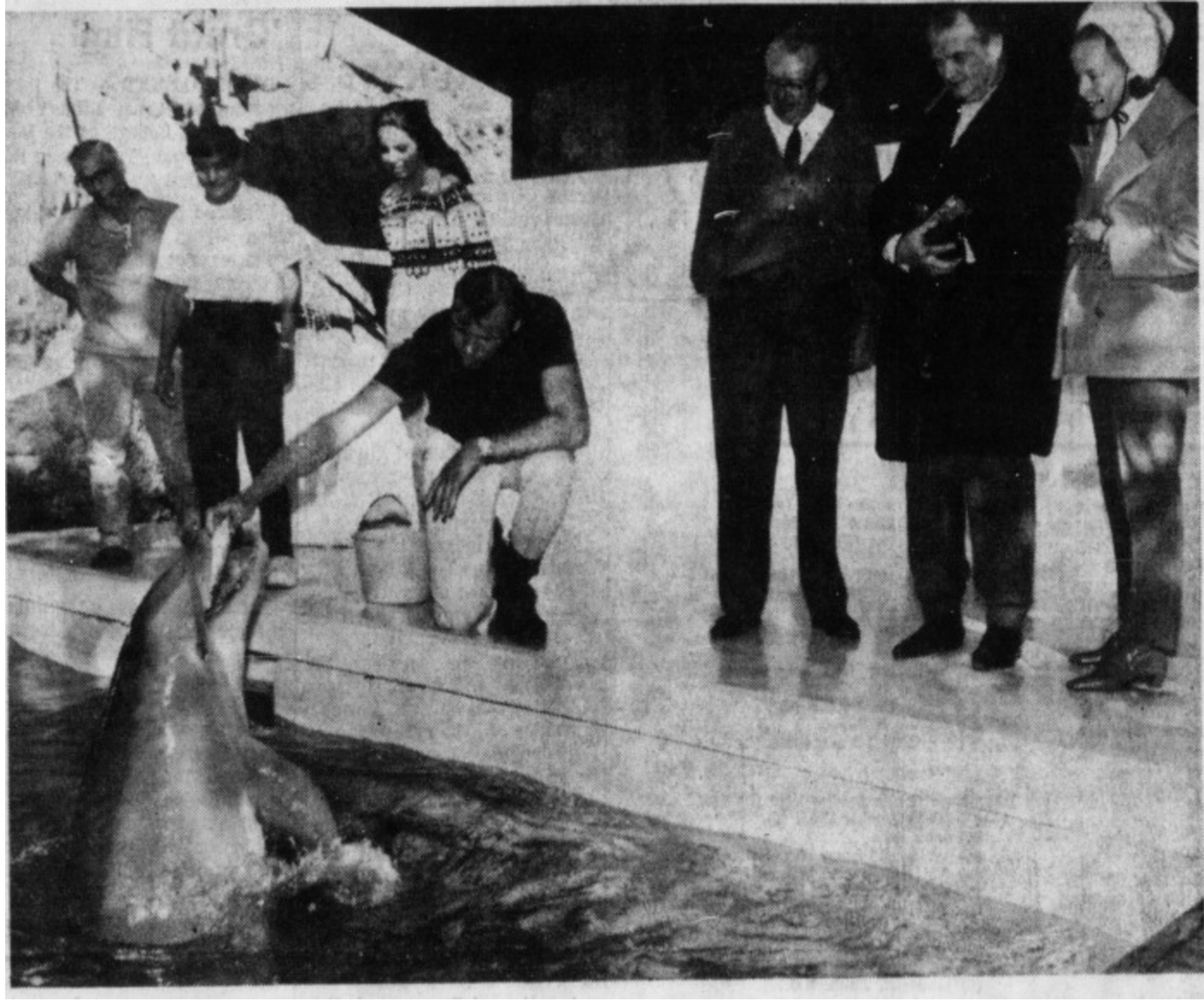 "Red Skelton ""put the dolphins through their paces by having them jump through a large hoop"" at the Palm Springs Aerial Tramway's Animal Park in 1968."