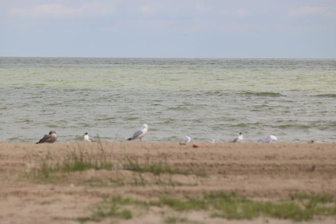 The harmful algal bloom spread across much of western Lake Erie in August 2019. The Ohio Lake Erie Commission recently updated domestic action plan for 2020 — a comprehensive and adaptive strategy to combat harmful algal blooms.