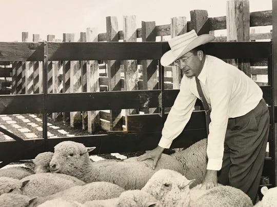 Elmer Kelton wades into the sheep pens for a closer look on assignment for the Standard-Times in 1959.  Kelton worked 15 years for the Standard-Times, helping to establish the Harte-Hanks organization as a major force in Texas news.