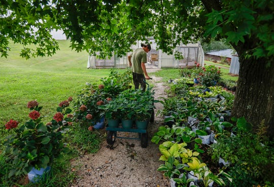 Allan Harper pulls a cart of poinsettias toward one of the greenhouses at Steinert's Greenhouse & Gardens on Thursday, Aug. 22, 2019.