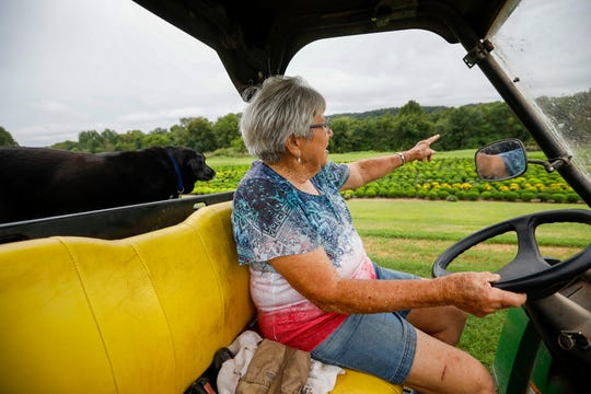 Theta Steinert and her dog Magnum ride in an all terrain vehicle past a field of mums at Steinert's Greenhouse & Gardens on Thursday, Aug. 22, 2019.