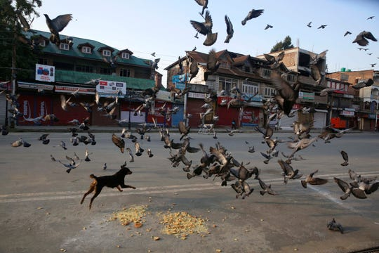 Pigeons fly near a closed market in Srinagar. Tensions have been renewed in the region after the Indian government moved a resolution in parliament that removes the special status of Jammu and Kashmir under Article 370 granted to the Kashmir region. Kashmir has been a matter of dispute between India and Pakistan since 1947, when both countries became sovereign states.