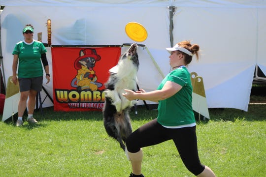 Sissy, a canine star with Team ZOOM, jumps up to catch a Frisbee during a show at the Sandusky County Fair.