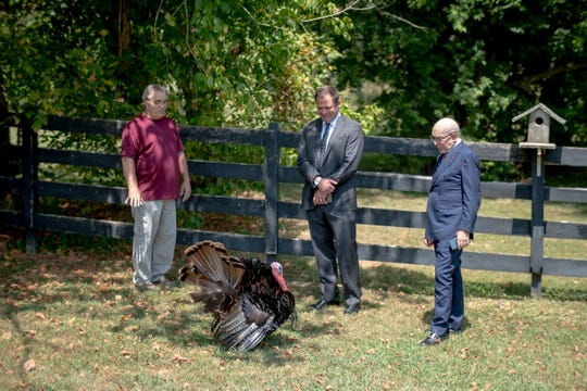From left, Kingston disaster worker Ansol Clark, attorney Tyler Roper and attorney Marc Bern look at Clark's turkey, Junior, at his home in West Knoxville on Aug. 22, 2019. Bern, who successfully represented 9/11 first responders who were poisoned by toxic dust from the World Trade Center, is now working on behalf of people affected by coal ash exposure.