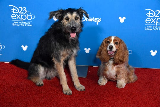 ANAHEIM, CALIFORNIA - AUGUST 23: Lady and the Tramp attend D23 Disney + event at Anaheim Convention Center on August 23, 2019 in Anaheim, California. (Photo by Frazer Harrison/Getty Images) ORG XMIT: 775380762 ORIG FILE ID: 1169836620