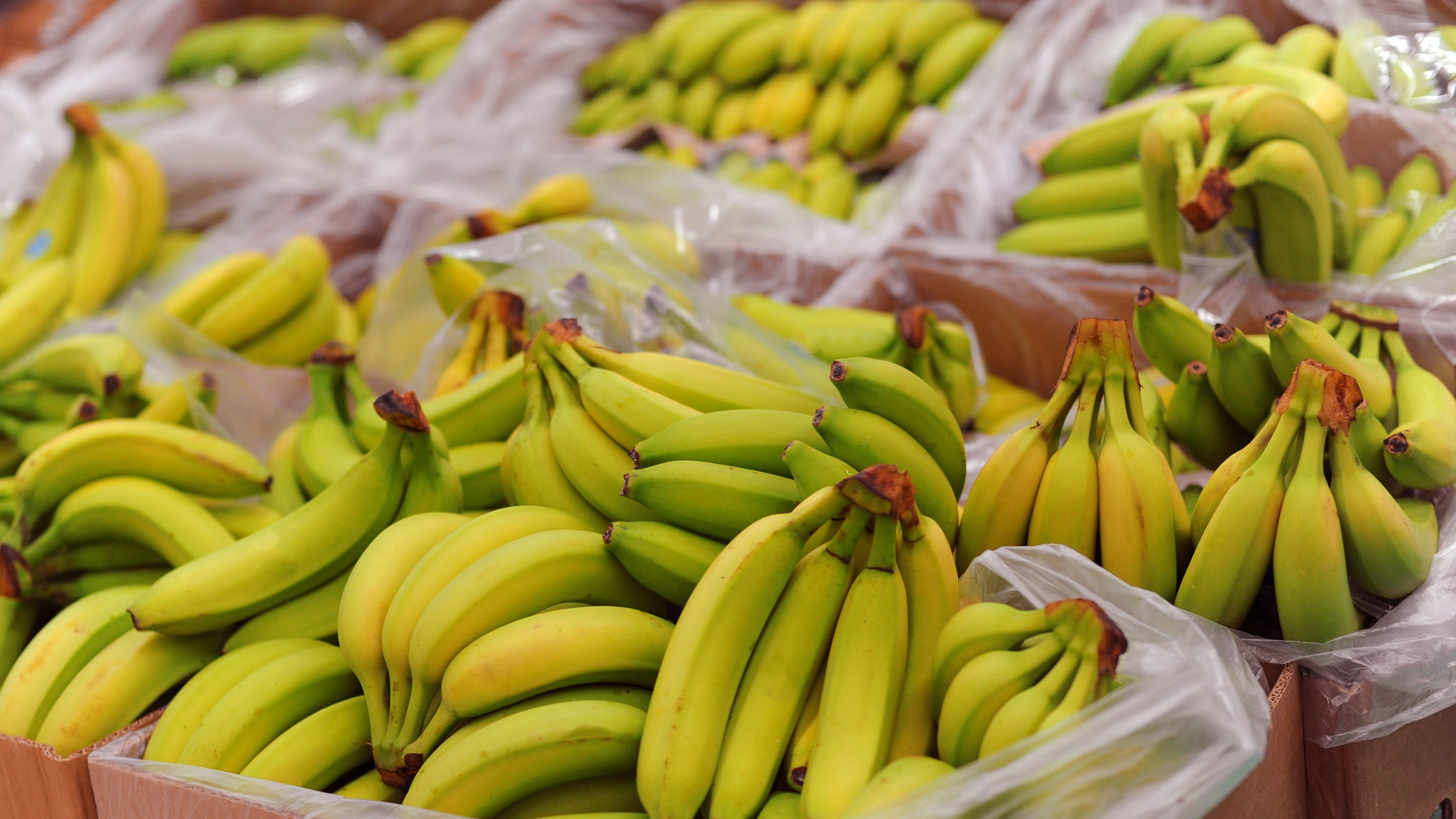 Cocaine stash worth more than $1M found in banana boxes at Washington grocery stores