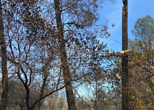 Crews are repairing damage and mopping up after the Mountain Fire burned 600 acres in the Jones Valley area northeast of Redding last week.