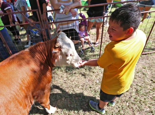 Teagan Hernandez feeds a cow at the petting zoo during the House of Faith's festival Saturday, Aug. 24, 2019.