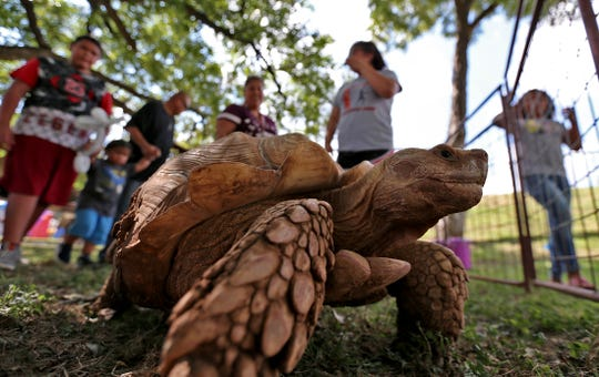 A tortoise entertains onlookers at a petting zoo at the House of Faith festival on Saturday, Aug. 24, 2019.
