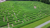 Drone footage over the Luke Bryan Farm Tour corn maze at Gull Meadow Farms in Richland, Michigan.