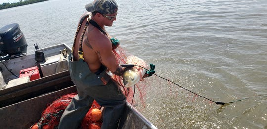 Shawn Price hauls in Asian carp with a net on the Iowa side of the Mississippi River. The state of Illinois contracts with certain commercial fisheries to hunt the invasive species in a bid to stop their spread toward the Great Lakes.
