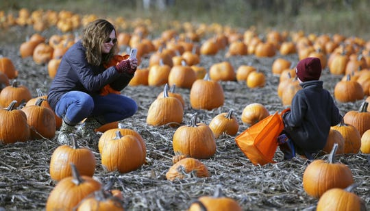 Carrie Mewton of Butte des Morts gets a photo of her son, Henry, as they pick pumpkins in 2018, at Cuff Farms in Hortonville.