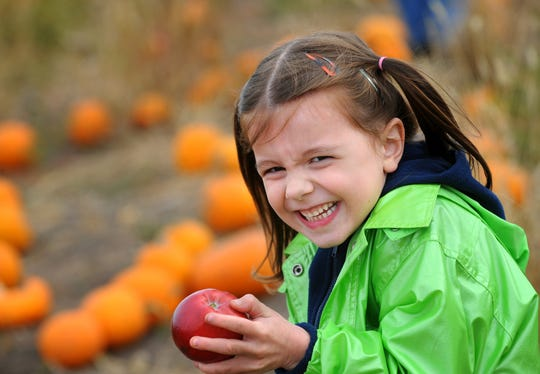 Jillian Burkhardt, from Sheboygan, giggles as she finds an apple in the pumpkin patch at the Little Farmer in 2010.
