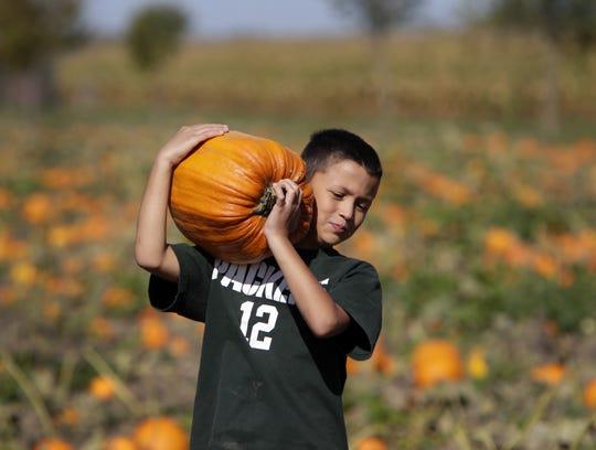Isias Gutierrez Kuhaupt of Oshkosh, picks pumpkins in 2013 at Mulberry Lane Farm, east of Sherwood.