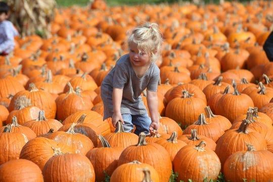 Waldvogel's Pumpkin Farm is Wisconsin's largest pumpkin farm.