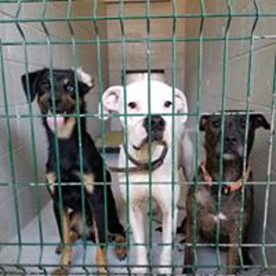 Dogs at the Henderson animal shelter is seen in this Facebook photo from the Humane Society of Henderson County.