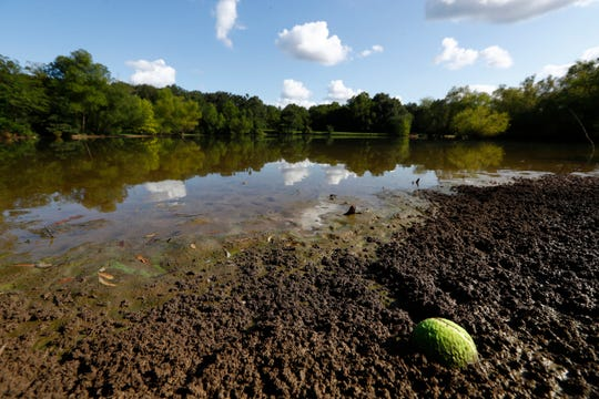 Officials said the water at the Outback Dog Park within Shelby Farms has tested within the EPA standard levels for safe water, after a Facebook post claiming two dogs had died after coming in contact with algae at the lake. Shelby Farms will keep the lakes closed however, as a matter of further precaution.