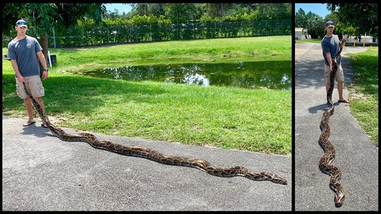 Kevin Reich of the Florida Fish and Wildlife Conservation Commission's Python Action team captured the second-largest Burmese python in the team's history. The recent catch measures 17 feet 9 inches.