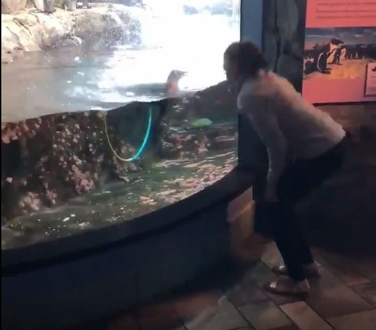 Rep. Alexandria Ocasio-Cortez made a surprise visit to the Monterey Bay Aquarium. Screenshot: Aug. 26, 2019.