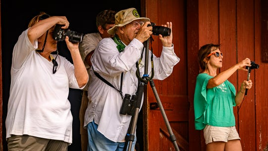 Spectators focus their cameras on the eagle release at Mutton Hunk Fen Natural Area Preserve near Parksley.