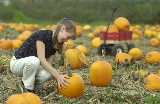 A girl looks for the perfect pumpkin at Helene's Hilltop Orchard, just south of Merrill.