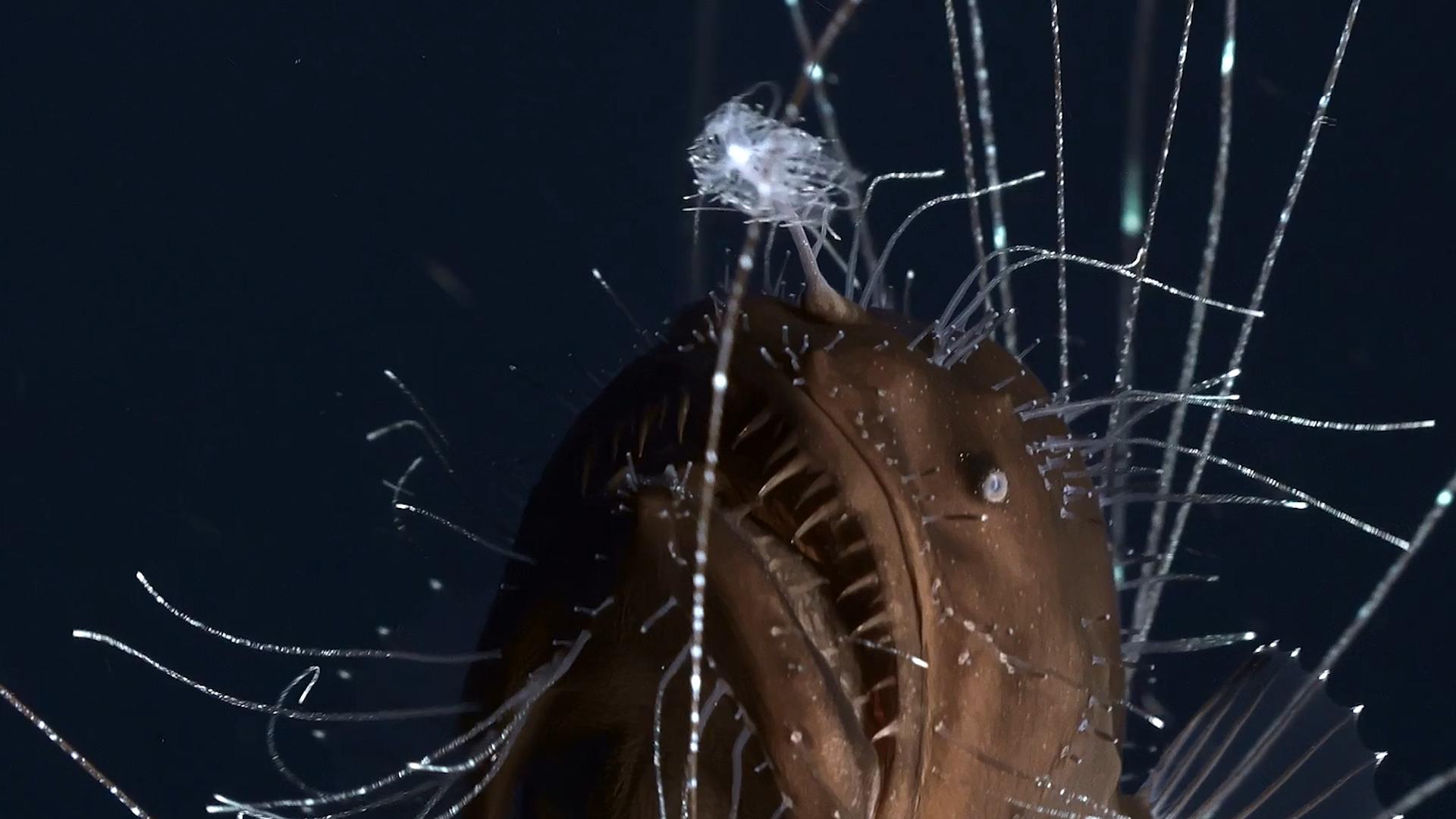Weird sea creatures found deep underwater