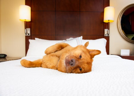 According to its website, Red Roof Inn welcomes one pet (under 80 pounds) per guest room free of charge. (You must disclose the pet's presence at check-in.) Call ahead to the individual location if you plan to bring more than one pet.