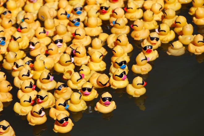 With Riverfest cancelled due to the COVID-19 pandemic, the 26th annual Rubber Duck Regatta will be virtual.